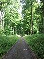 Im Wald nahe der Römerstraße - panoramio (1).jpg