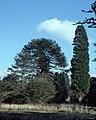 In Lord Headfort's arboretum. - geograph.org.uk - 70384.jpg
