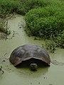 In the muddy pond... (6064526842).jpg