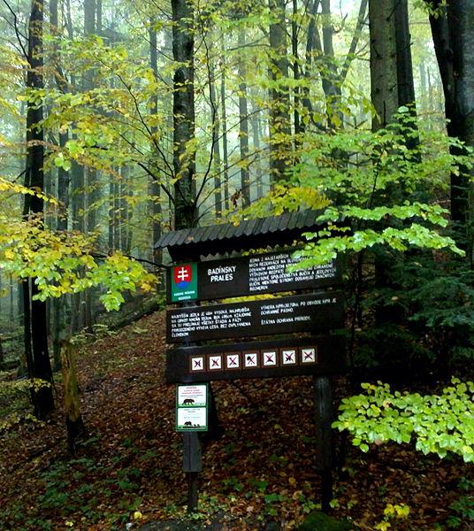 Národná prírodná rezervácia Badínsky prales