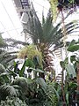 Internal, Palm House, Sefton Park (11).jpg