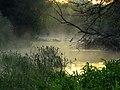 Irpin river fog7.JPG