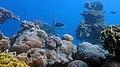 Israel - Eilat, Underwater scenery - panoramio.jpg