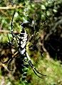 Itsy Bitsy Spider (7415306214).jpg