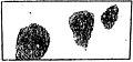Jaëll - L'intelligence et le rythme dans les mouvements artistiques, 1904 (page 72 crop fig 17).jpg