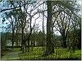January Frost Botanic Garden Freiburg Safran Wiesen - Master Botany Photography 2014 - panoramio.jpg