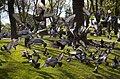 Jardim do Morro, Vila Nova de Gaia, Portugal, 2012-05-09, DD 03.JPG