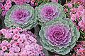 Jardin éphémère (Nancy, violet).jpg