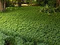 Jardines de Sabatini, plantas, Madrid, España, 2015.JPG