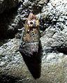 Jaskinia Dzika a3.jpg