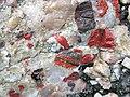 Jasper-quartz pebble conglomerate (Lorrain Formation, Paleoproterozoic, ~2.3 Ga; Ottertail Lake Northeast roadcut, near Bruce Mines, Ontario, Canada) 23 (46793236655).jpg