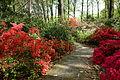Jenkins Arboretum - DSC00590.JPG