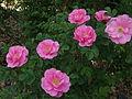 Jens Munk flowers.JPG