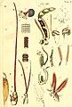 Jobi Basteri med. doct., Acad. Caes. Opuscula subseciva - observationes miscellaneas de animalculis et plantis, quibusdam marinis, eorumque ovariis et seminibus continentia (1760) (14769223772).jpg
