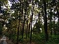 Jungle of buxa 2.jpg