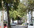 Köln Glücksburgstr. Allee.jpg