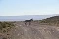 Karoo National Park 2014 29.jpg