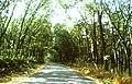 Kavalakkapacha Road.jpg
