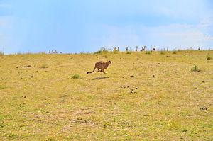 Kenia 2012 (88).JPG