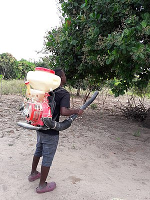 Insecticide - Farmer spraying an insecticide on a cashewnut tree in Tanzania
