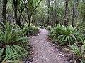 Kepler Track, New Zealand (73).JPG