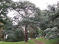 Kew Gardens - London - September 2008 (2953428565).jpg