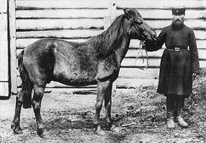 Das einzige bekannte Foto eines Tarpans, bei dem jedoch nicht bekannt ist, ob er reinrassig war (veröffentlicht im Jahr 1884)