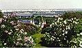 Kiev BotanicalGardens lilacs.jpg