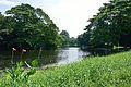 Kings Lake - Indian Botanic Garden - Howrah 2012-09-20 0088.JPG