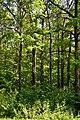 Kivertsi Volynska-Dubovyk nature monument-trees-1.jpg