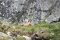 Kozica pod czerwoną ławką - panoramio.jpg