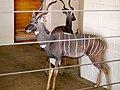 Kudu (5235505832).jpg