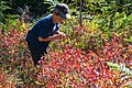 Kulshan Creek Youth Project - Boy Picking Huckleberries, Mt Baker Snoqualmie National Forest (31993919461).jpg