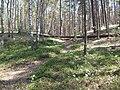 Kunersdorfer Forst Seddiner See.JPG