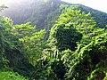 La Guadeloupe compose en verts.jpg
