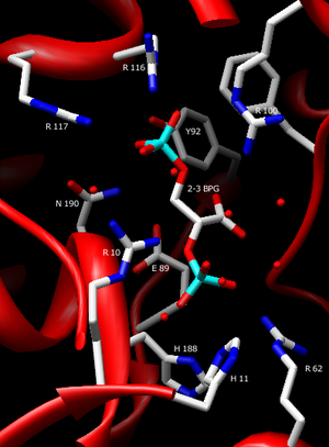 Bisphosphoglycerate mutase - Image: Labeled Active Site
