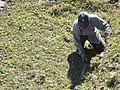 Landscape Worker at Machu Picchu Peru (4875619159).jpg