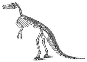 Edmontosaurus - Skeletal restoration of the E. annectens (then Claosaurus) holotype, by Othniel Charles Marsh