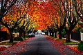Last bit of Autumn (27498257865).jpg