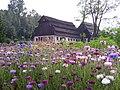 Len w ogrodzie przy Muzeum Papiernictwa (Duszniki).JPG