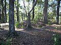 Letchworth Mounds08.jpg