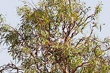 Een letterwouw in een nest in een boom overschaduwd door gebladerte
