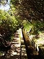 Levada 25 Fontes, Madeira, Portugal, June-July 2011 - panoramio (22).jpg