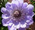 Lilac Flower (7433780314).jpg