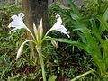 Lilli (white).jpg