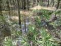 Little River Trail 06, Reed Bingham Park.JPG