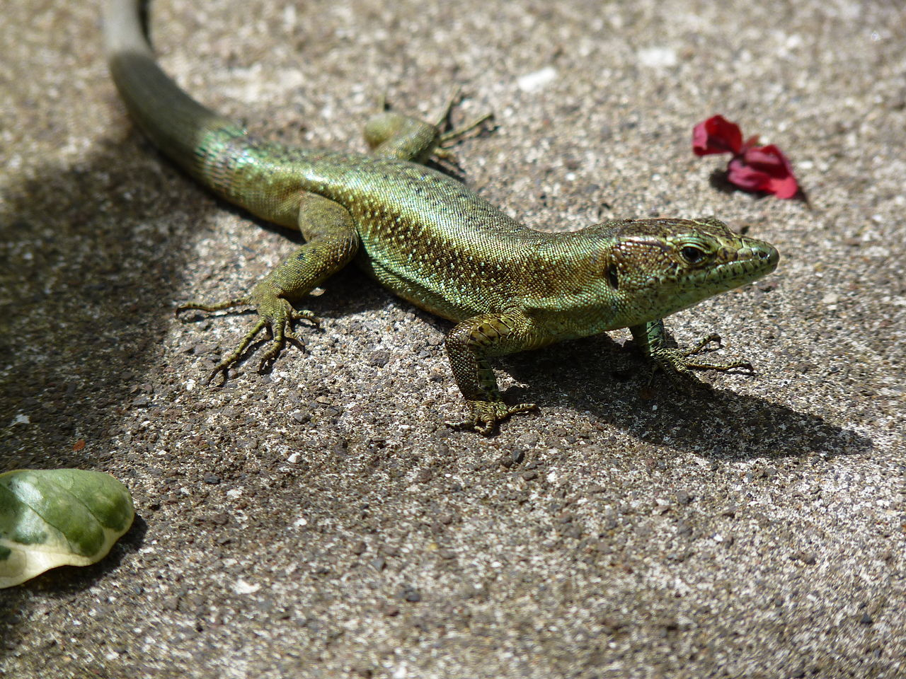 Lizard dating site