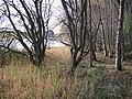 Loch of Lintrathen - geograph.org.uk - 603514.jpg