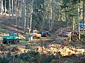 Logging Operation 1 - geograph.org.uk - 685615.jpg