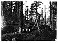 Logging operation of Bridal Veil Lumbering Co-Oregon-1911.jpg